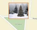 Где купить новогоднюю ёлку в Минске?