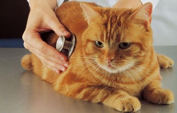 Где находятся ветеринарные клиники в Минске?
