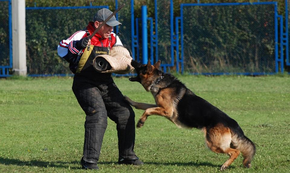 Где осуществляют дрессировку собак в Минске?