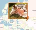 Куда съездить на пикник в Минске?