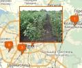 Где продают саженцы в Минске?